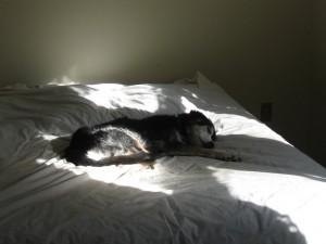 wylie-sunbeam