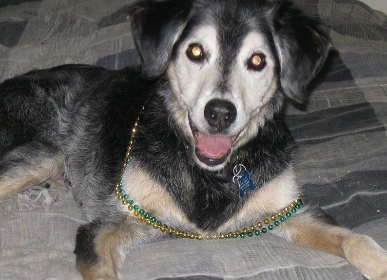 Wylie, wearing Mardi Gras beads.